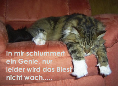http://www.elkes-grusskarten.de/grusskarten//witziges/biest.jpg